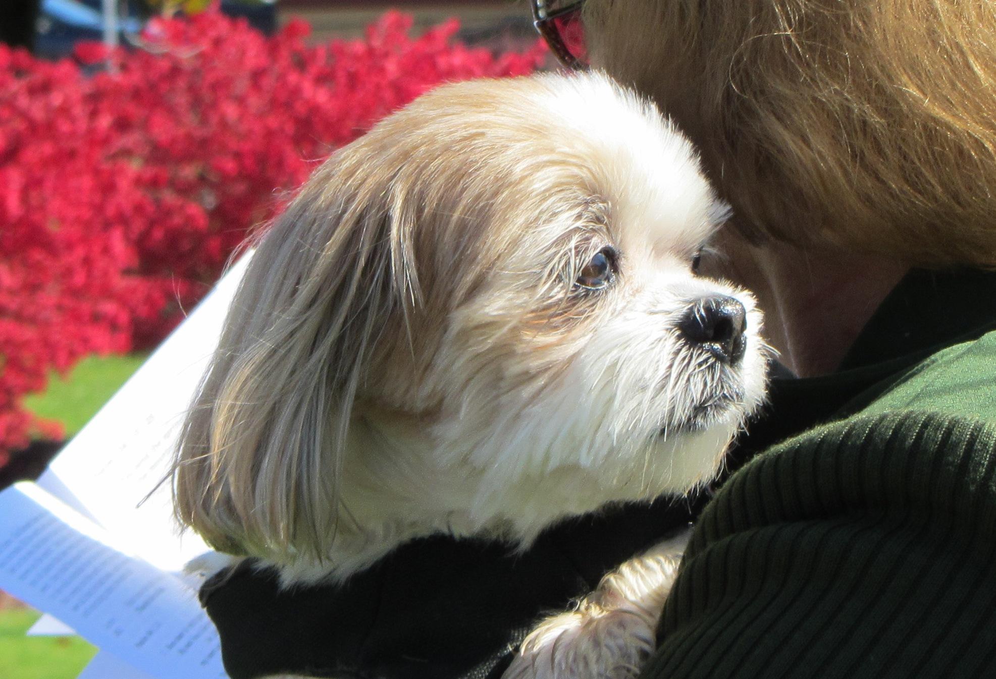 Dog at Pet Blessing