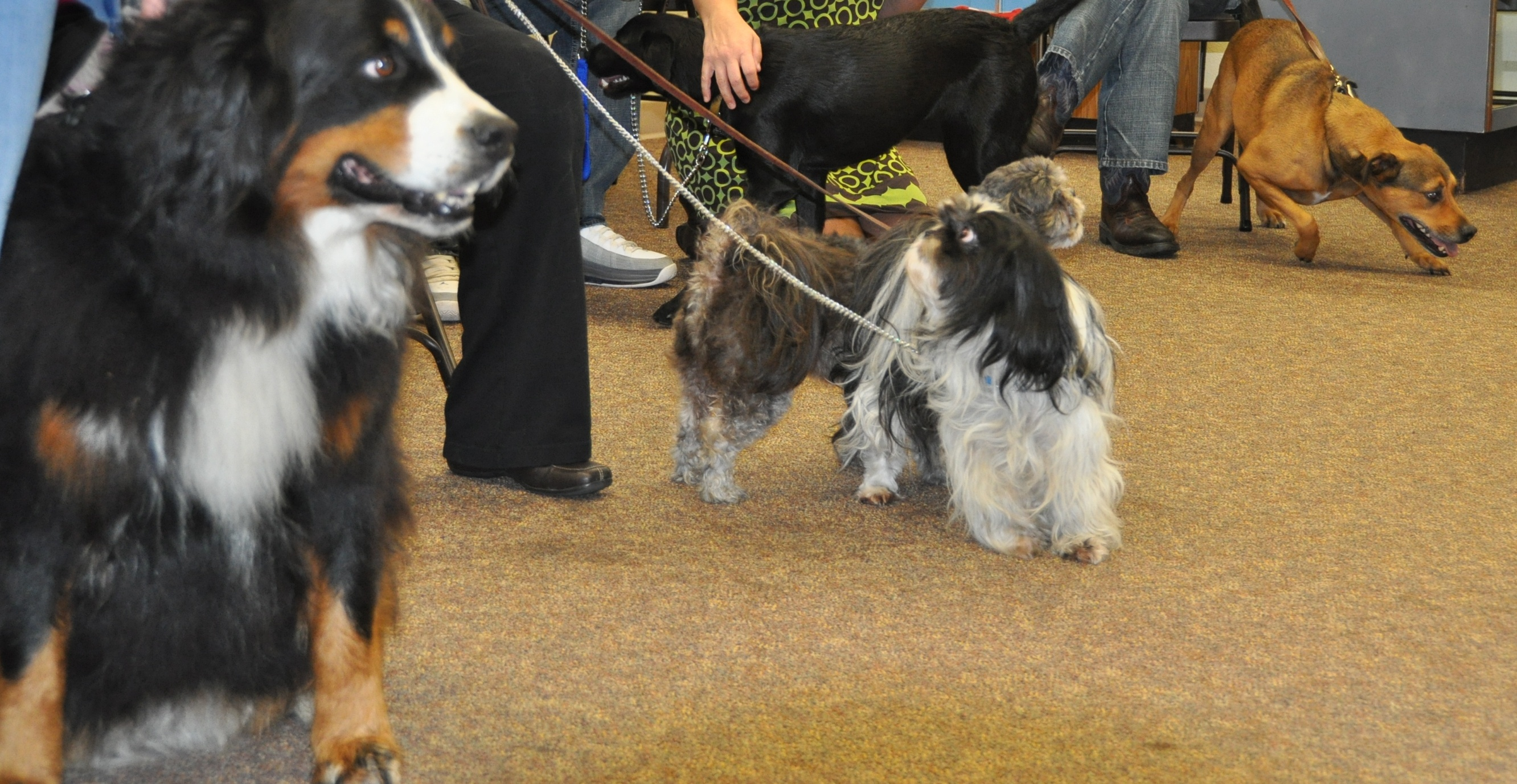 Dogs at Pet Blessing