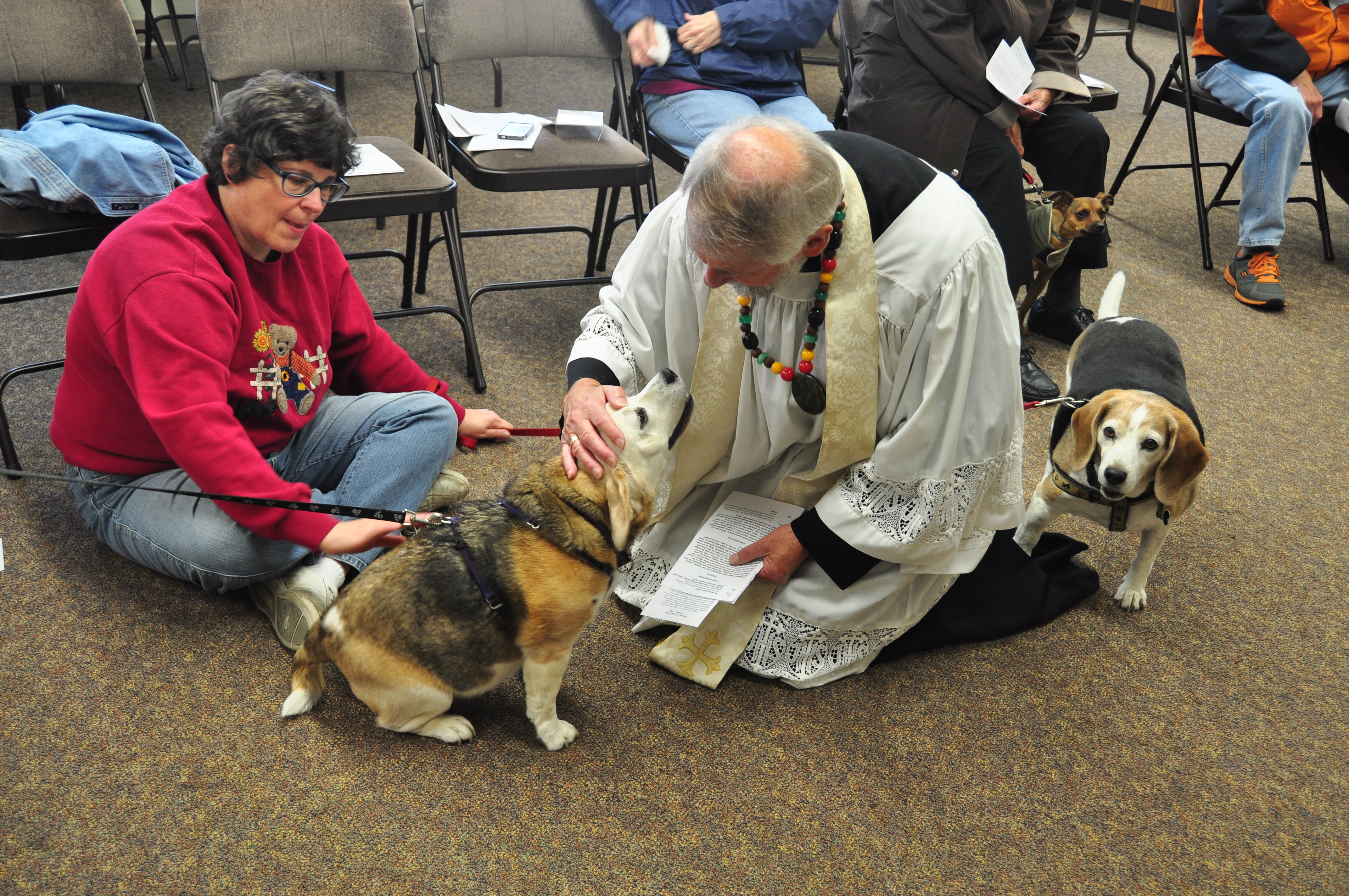 St  Francis Day Blessing of the Animals   St  Alban's